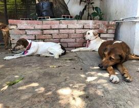 Không còn tiền nuôi, dân Venezuela thả chó hoang đầy đường