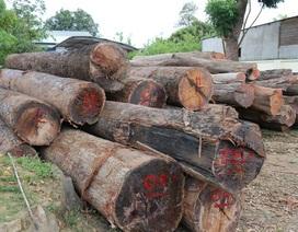 Vụ bắt trùm gỗ lậu: Kiểm điểm các lãnh đạo Bộ đội Biên phòng Đắk Lắk