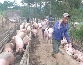 """""""Bão"""" dịch tả lợn châu Phi, hải quan dừng thông quan thịt lợn biếu, tặng"""