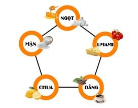 Umami và hành trình ghi danh vào nền ẩm thực nhân loại