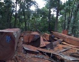 Để mất rừng, Giám đốc công ty lâm nghiệp bị kỷ luật