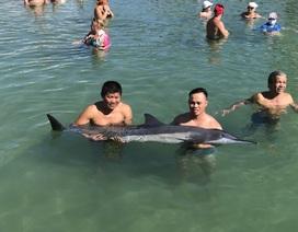Cá heo nặng 60 kg dạt vào bờ biển Nha Trang