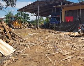 """Xưởng sản xuất gỗ """"3 không"""" mọc lên như nấm, chính quyền có làm ngơ?"""