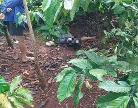 Điều tra nguyên nhân tử vong của người đàn ông trong rẫy cà phê