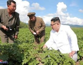 Ông Kim Jong-un dốc sức vực dậy nền kinh tế Triều Tiên