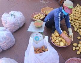 3 tháng, gần 600 tấn khoai tây Trung Quốc được nhập vào Đà Lạt, nông dân khốn đốn