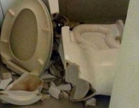 Bị cắt đứt mông khi ngồi xổm trên bồn cầu vệ sinh