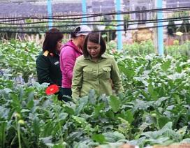 Làng hoa lâu đời nhất Quảng Trị tất bật chuẩn bị hoa Tết