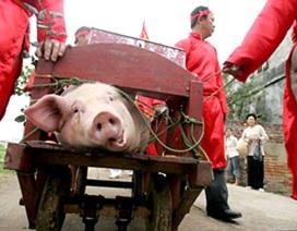 Chấm dứt màn chém lợn gây tranh cãi ở Lễ hội Ném Thượng