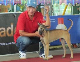 """Tìm được """"Hoa hậu"""" chó ở cuộc thi mở rộng lần thứ nhất năm 2017"""
