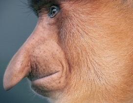 """Những bức hình """"đầy ám ảnh"""" về các loài động vật sắp biến mất hoàn toàn"""