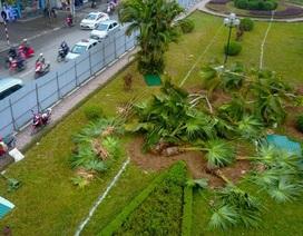 Hà Nội bắt đầu xén dải phân cách đường đẹp nhất Việt Nam