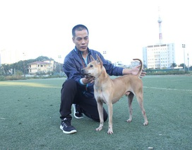 Mục sở thị trang trại nuôi chó Phú Quốc bạc tỷ ở Hà Nội