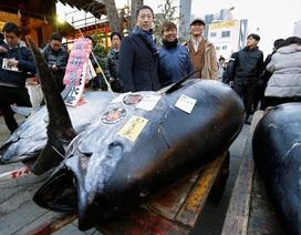 Một nhà hàng Nhật chi gần 7,4 tỷ đồng để mua 1 con cá ngừ