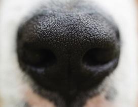 Mũi điện tử phát hiện các bệnh về ruột