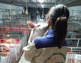 """Kì thực tập bên đàn lợn của cô sinh viên trường Nông Lâm """"đốn tim"""" cộng đồng mạng"""