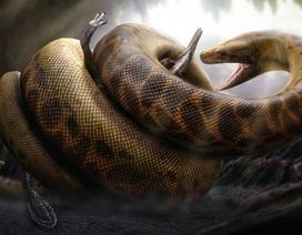 Một con rắn thời tiền sử dài ngang một chiếc xe buýt