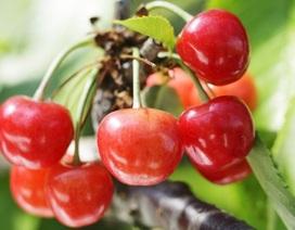 """Lý do thực sự khiến trái cây Nhật Bản có giá """"trên trời"""""""