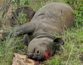 Các nhà khoa học pháp y dùng ADN để bắt những kẻ săn trộm tê giác