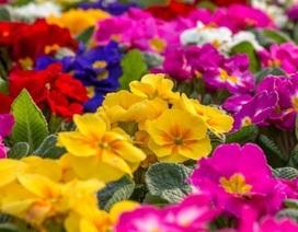 Các loài thực vật có hoa chinh phục thế giới bằng cách nào?