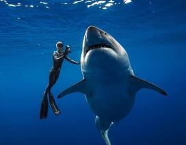 Sửng sốt trước bộ ảnh thợ lặn chụp bên cá mập trắng lớn nhất thế giới