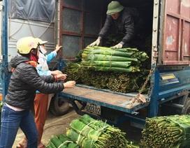 Thanh Hoá: Kiếm tiền triệu từ lá dong rừng