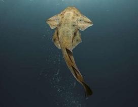 Xuất hiện loài cá mập hiếm ở bờ biển xứ Wales