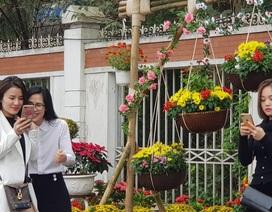 Con đường hoa xuân độc đáo Thành Vinh