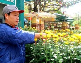 Thị trường hoa Tết Hội An: Người xem thì nhiều, người mua thì ít