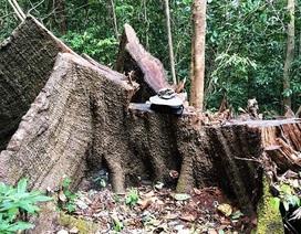 """Chất vấn Thủ tướng về lệnh đóng cửa rừng """"trên rất thiêng nhưng dưới không nghiêm"""""""