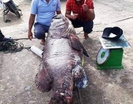 """May mắn bắt được cá mú """"khủng"""" hơn 80kg chuyến đi biển cuối năm"""