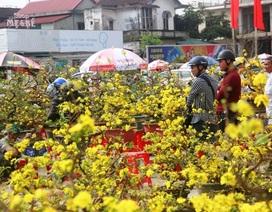 Người dân Quảng Trị hối hả mang hương Tết về nhà