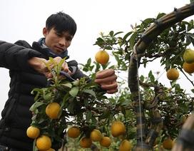 Khởi nghiệp nông nghiệp: Mặn mồ hôi, ngọt thành quả