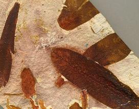 Nạn nhân đầu tiên của thảm hoạ tuyệt chủng lớn nhất trên Trái Đất là... thực vật