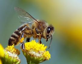 Loài ong có thể học… giải được toán