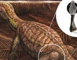 Ung thư xương ác tính được phát hiện có từ loài rùa Kỷ Trias