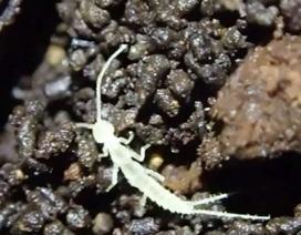 Những sinh vật chưa từng được biết đến có thể bị nhốt trong hang tối từ thời kỳ băng hà
