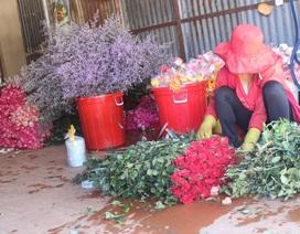 Hoa hồng tăng giá mạnh dịp Lễ tình nhân Valentine