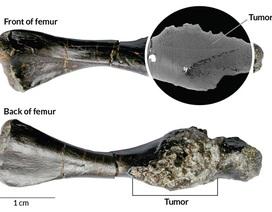 Phát hiện trường hợp ung thư xương hiếm gặp ở tổ tiên loài rùa các đây 240 triệu năm