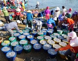Quảng Ngãi: Trúng cá cơm, ngư dân thu 50 - 60 triệu đồng mỗi đêm.