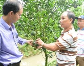 Chủ động tìm nguồn thực phẩm sạch cho dân