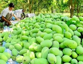 Xoài Việt Nam chính thức được phép xuất khẩu sang Mỹ