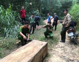 Phát hiện hàng chục khối gỗ lậu tập kết trên đường mòn vào rừng