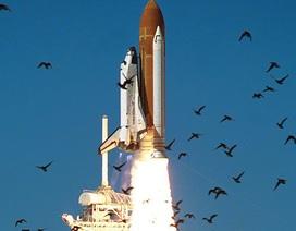 Tên lửa của Elon Musk có thể bị đe dọa nghiêm trọng bởi bụi và phân chim