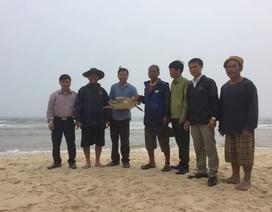 Thả rùa biển quý hiếm vướng lưới ngư dân về tự nhiên
