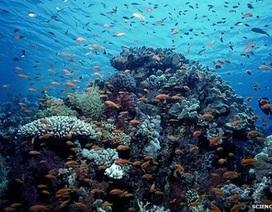 Tin vui cho Trái Đất: Thành lập 2 khu bảo tồn biển rộng tương đương Hungary