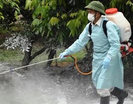 Thái Bình: Rốt ráo phòng chống lây lan dịch tả lợn châu Phi