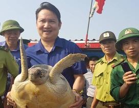 Vận động ngư dân giao nộp cá thể rùa quý để thả về biển