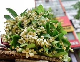 Mùa hoa bưởi tháng 3 – nét chấm phá cho phố phường Hà Nội