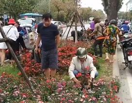 """Hà Nội: Ngao ngán với cảnh người dân """"hôi..."""" hoa trên đường Kim Mã"""